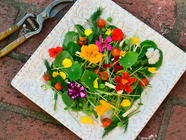 Edible Flowers found on PunkDomestics.com