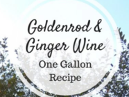 Goldenrod and Ginger Wine – One Gallon Recipe found on PunkDomestics.com