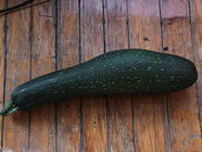 18 Inches of Zucchini. What's a Boy to Do? found on PunkDomestics.com