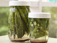 Winey Briny Pickled Asparagus
