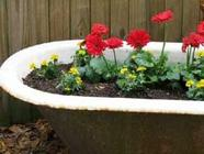 Turn Unwanted Junk into Container Gardens