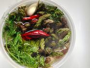 Spicy Garlic & Dill Pickled Asparagus found on PunkDomestics.com