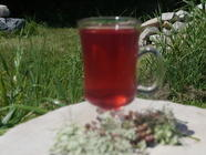 Wildflower Cordial found on PunkDomestics.com