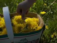 Dandelion Wine found on PunkDomestics.com