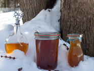 What We're Learning About Making Maple Syrup found on PunkDomestics.com