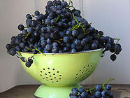How to Juice Grapes for Jelly found on PunkDomestics.com