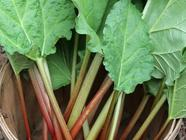 Harvesting Rhubarb found on PunkDomestics.com