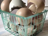 Egg Shells = Supplement for your Garden
