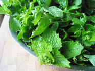 Garlic Mustard Soup