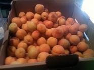 Apricot Kernel Jam found on PunkDomestics.com