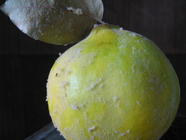 Canned Quinces, found on PunkDomestics.com
