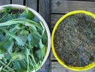 Natural Homemade Garden Fertilizer