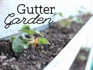 Get Gardening in a Gutter in Just Two Hours! found on PunkDomestics.com