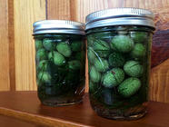 Pickled Mouse Melons found on PunkDomestics.com