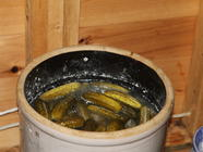Wild Dill Pickles Recipe found on PunkDomestics.com