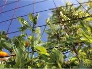 Vertical Gardening with Concrete Wire Mesh