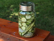 Overnight Dill Pickles found on PunkDomestics.com