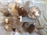 Foraging mushrooms, found on Punk Domestics