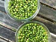 Pickled Green Coriander Seed found on PunkDomestics.com