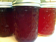 Perfect Prickly Pear Jelly found on PunkDomestics.com