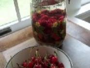 Sour Cherry Liqueur found on PunkDomestics.com
