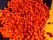 Rowan Berry Jelly (AKA Mountain Ash Jelly) found on PunkDomestics.com