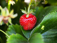 Strawberry-Marsala Jam with Rosemary found on PunkDomestics.com