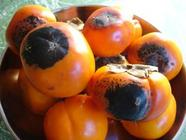 Sunburned Persimmons? Try Persimmon Butter found on PunkDomestics.com
