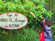 Top 10 Things to Forage in Autumn found on PunkDomestics.com