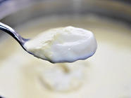 The Art & Science of Homemade Yogurt