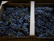 Wild Grape Jelly found on PunkDomestics.com