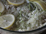 Elderflower Sun Cordial