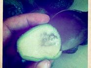 Have You Tasted Feijoas? Try This Simple Jam! found on PunkDomestics.com