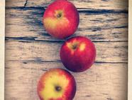 Apples found on PunkDomestics.com