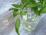 Simple Ways to Grow Herbs... Cheap. found on PunkDomestics.com
