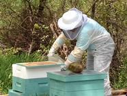 Beekeeping found on PunkDomestics.com