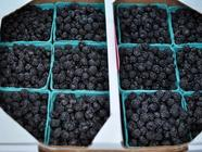 Black Raspberry Jam found on PunkDomestics.com