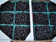 Black Raspberry Jam found on PunkDomestics.com