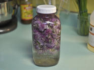 Chive Blossom Vinegar found on PunkDomestics.com