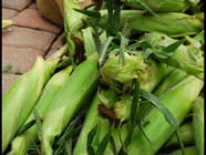 Freezing Sweet Corn