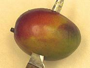 Mango Mojito Jam found on PunkDomestics.com
