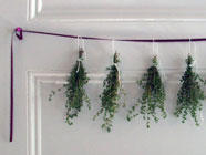 Freezing, Drying, and Storing Herbs 101 found on PunkDomestics.com