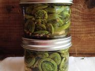 A Trio of Pickles found on PunkDomestics.com