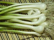 Field Garlic or Yard Onions