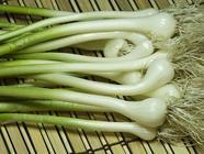 Field Garlic or Yard Onions found on PunkDomestics.com