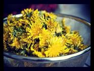 How to Make a Fine Dandelion Wine found on PunkDomestics.com