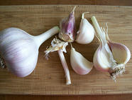 Grow/Harvest Hardneck Garlic found on PunkDomestics.com