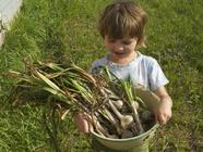 Planting Autumn Garlic