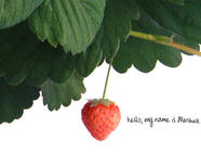 Bringing Back an Extinct Strawberry