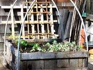 DIY Hoop Houses & Cold Frames found on PunkDomestics.com